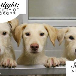 Humane Society of South Mississippi