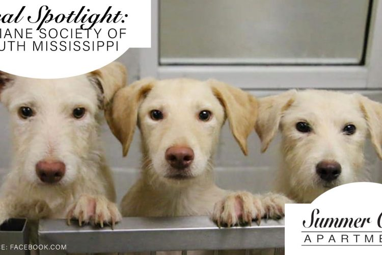 Local Spotlight: Humane Society of South Mississippi