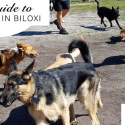 guide to dog parks in Biloxi